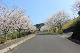 花瀬公園3